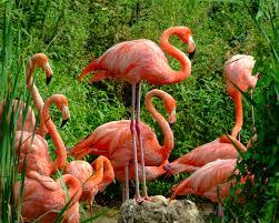 """Вязаная игрушка """"Розовый фламинго"""""""